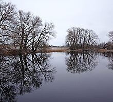 The Edge Of Spring by Debbie Oppermann