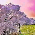 Pastel Winter by NatureGreeting Cards ©ccwri