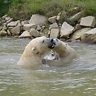 Polar Bears playing in water 3 by LoneAngel