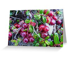 Wild Moss Cranberries Greeting Card