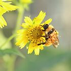 Busy busy bee by Olivia Moore