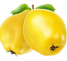Two quince fruits by 6hands