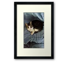 The Blanket Thief Framed Print