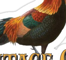 Heritage Livestock - Red Jungle Fowl Rooster Sticker