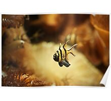 Cute Striped Fish Swimming Among Golden Coral Poster