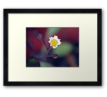 ©NS White Winter Bloom IIA. Framed Print