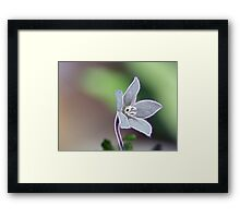 ©NS Dream White Bloom IA. Framed Print