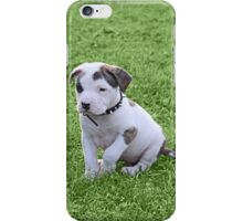 Pit Bull T-Bone Puppy iPhone Case/Skin