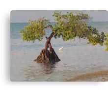 Oil Painting Seaside Tree Canvas Print
