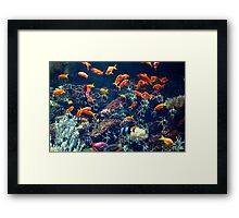Tropical Fish swimming in the sea Framed Print