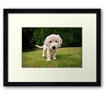 Cheeky Pup Framed Print