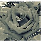 Grayscale Rose by treolson