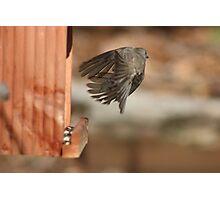 Birds Are So Amazing! Photographic Print