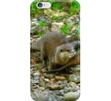 Otters making their way to the water iPhone Case/Skin