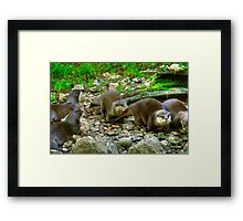 Otters making their way to the water Framed Print