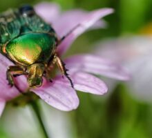 The Rose Chafer Sticker