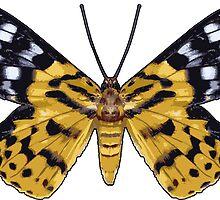Day Flying Moth Butterfly by Garaga