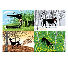 Hound Seasons Photographic Print