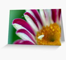 Striped Beauty 2 Greeting Card