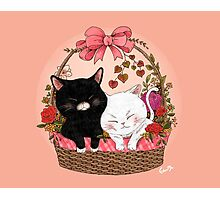 Basket of kittens Photographic Print
