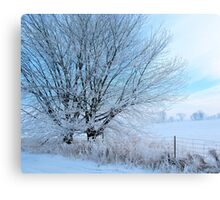 Covered in ice Canvas Print