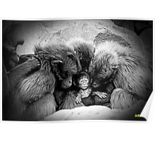 little chimp surrounded with love Poster