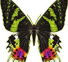 Rainbow Catcher Butterfly by Garaga