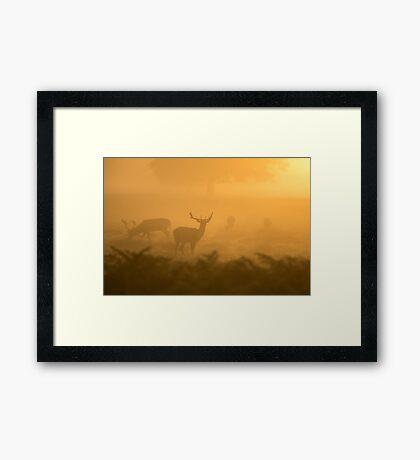 Deers Forest Nature Fine Art Photography 0036 Framed Print