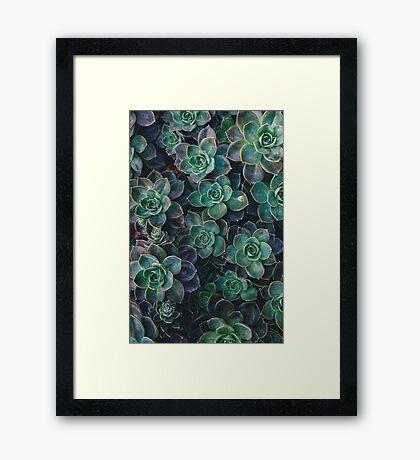 Succulent Plants Nature Fine Art Photography 0038 Framed Print