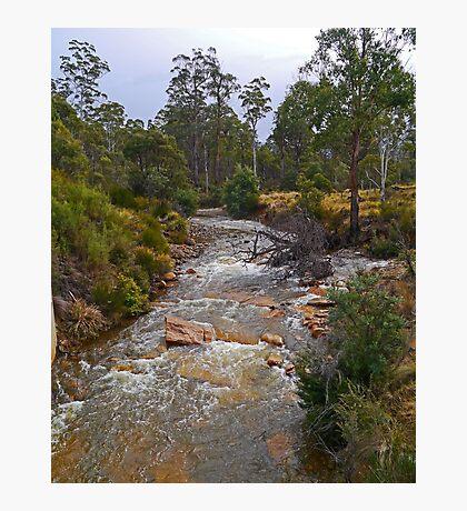 Creek, Rossarden, Tasmania, Australia Photographic Print