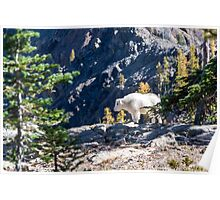 Forest Wild Lamb Creature Nature Fine Art Photography 0040 Poster