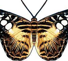 Tiger Butterfly by Garaga