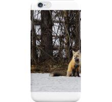 Beautiful Red Fox No. 4 iPhone Case/Skin