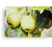 Yellow Apples Canvas Print