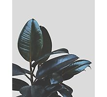 Botanical Art V4 #redbubble #tech #style #fashion Photographic Print