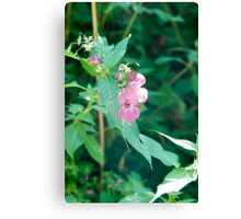 Pink Alpine wildflower, Photographed in Austria, Tyrol Canvas Print