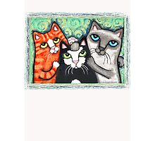 Siamese Tabby and Tuxedo Cats Posing T-Shirt  Photographic Print