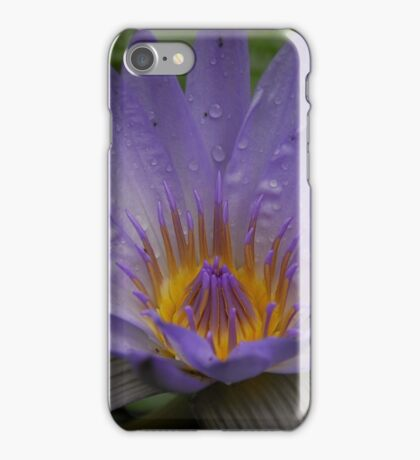 Purple water lily. iPhone Case/Skin