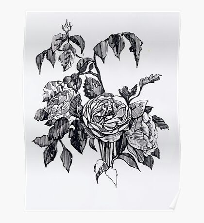 Realistic roses. Black and white hand drawing pattern Poster