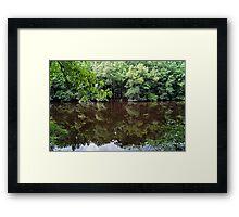 Congaree Nature Reserve, South Carolina, USA Framed Print
