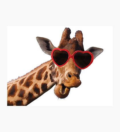 Cool Giraffe wearing Sunglasses ( fun humour comedy ) Photographic Print