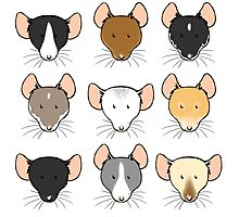 Ratty Faces Photographic Print