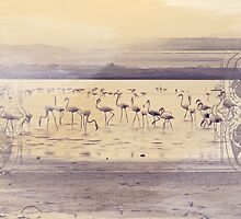 Flamingos by infloence