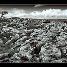 Clwydian Limestone by Geoff Carpenter