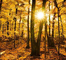 Impressions of Forests - Sunburst in the Golden Forest  by Georgia Mizuleva