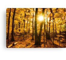 Impressions of Forests - Sunburst in the Golden Forest  Canvas Print