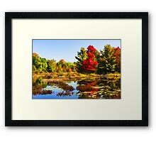 Impressions of Forests - Bright Red Maple, Reflected Framed Print