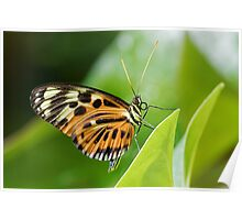 Butterfly Resting Poster