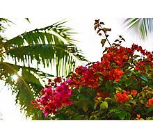 Tropical Impressions - Bougainvilleas and Palm Fronds in the Sky Photographic Print