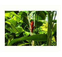 Tropical Impressions - Red Ginger Flower, Framed in Lush Jungle Green Art Print